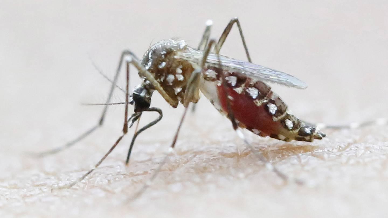 denguefeber